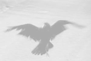 ed il corvo fischiò